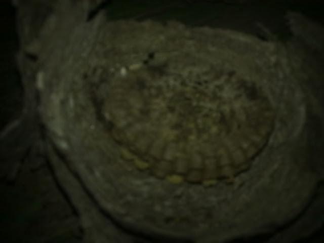 Осиное гнездо внутри