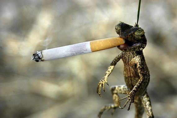 Funny+Animal+Smoking_2.jpg