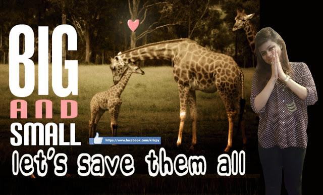 Kricpy - Save Giraffe