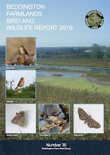 BEDDINGTON FARMLANDS BIRD AND WILDLIFE REPORT 2019