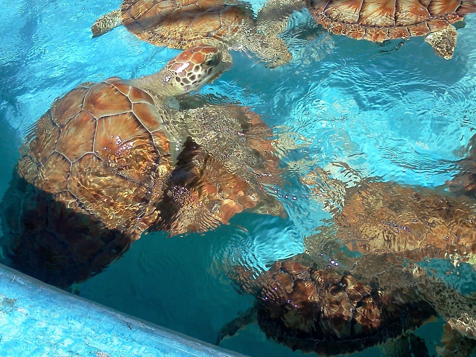 Turtle Farm Isla Mujeres
