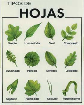 Blog de quinto unidad de conocimiento 11 for Cuales son los tipos de arboles
