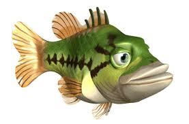 Hình ảnh động của các loài cá