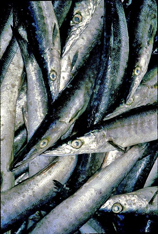 Fascinating humanity june 2013 for Fishing in ecuador