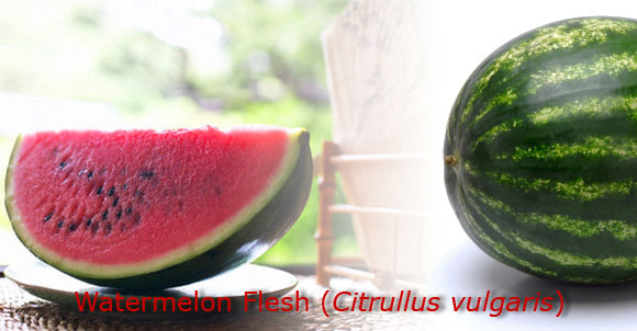 Herbal medicinal | watermelon | citrullus vulgaris