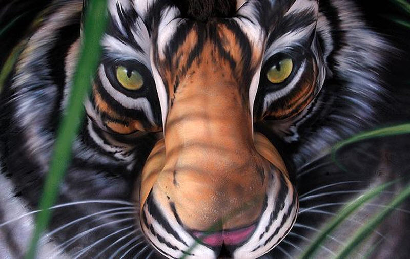 Bengal Tiger Paint Colour