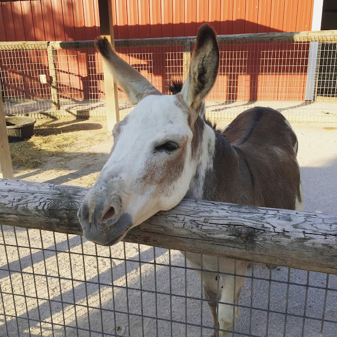 August Instagrams: A friendly donkey at Blank Park Zoo