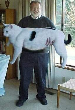 funny picture of a man and an enormous cat