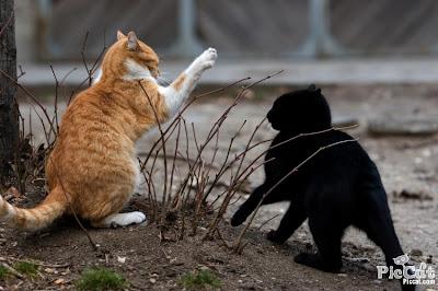 http://4.bp.blogspot.com/-zKlph6MaVgY/ThWHCV32YWI/AAAAAAAAM-A/iXxPO_y76gQ/s1600/Cats_Fighting.jpg