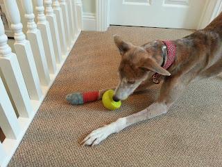 Mina tries out the Dublin Dog Roxxter