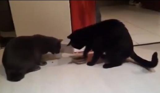 прикольное видео про кошек