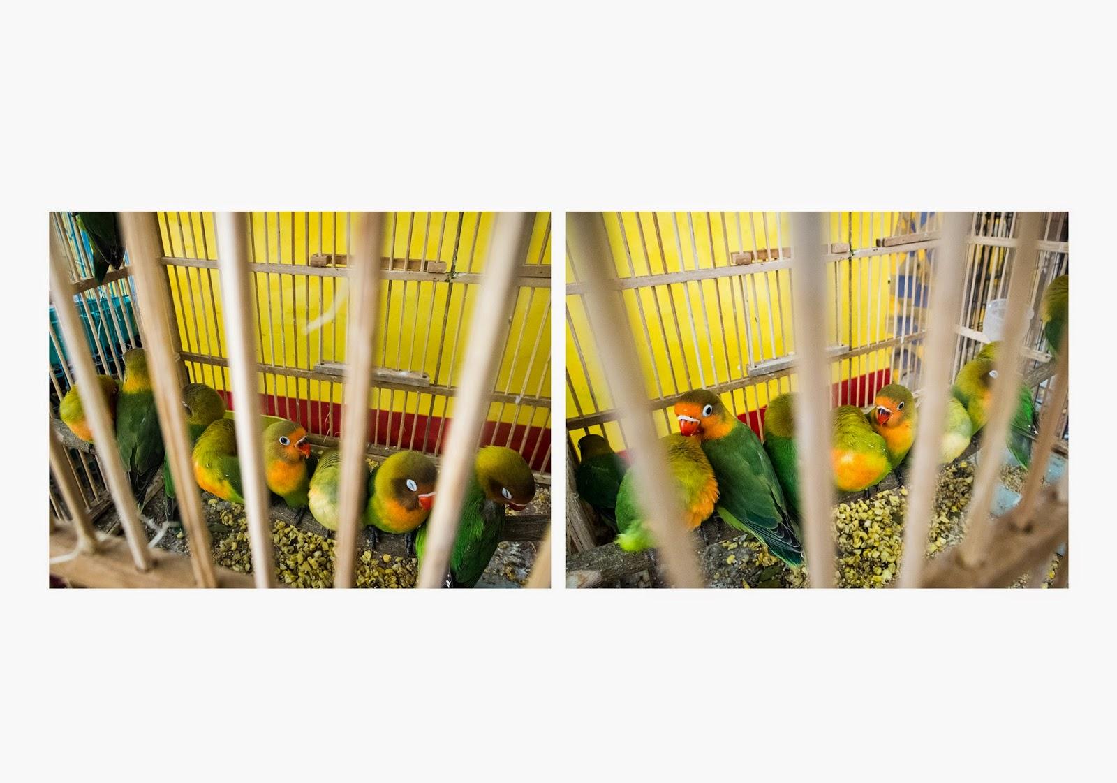 Pasar Burung Splendid Kota Malang Garry Pictures