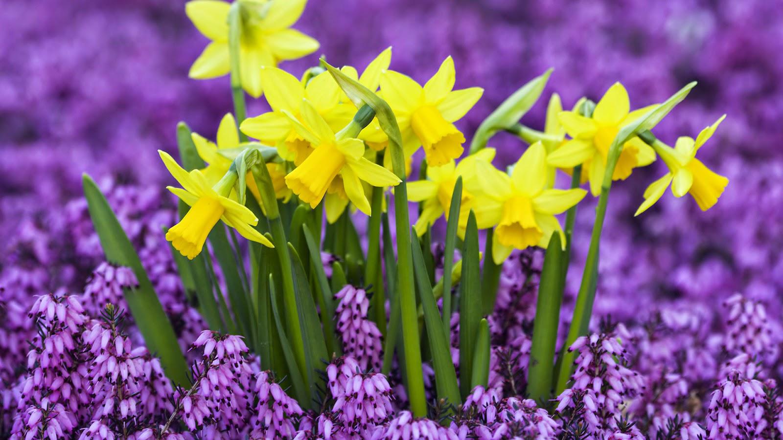 Les fleurs d'hiver: