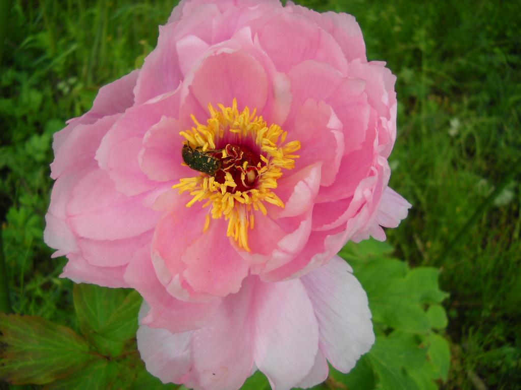 Daily Glimpses Of Japan Spring Flowers In Japan