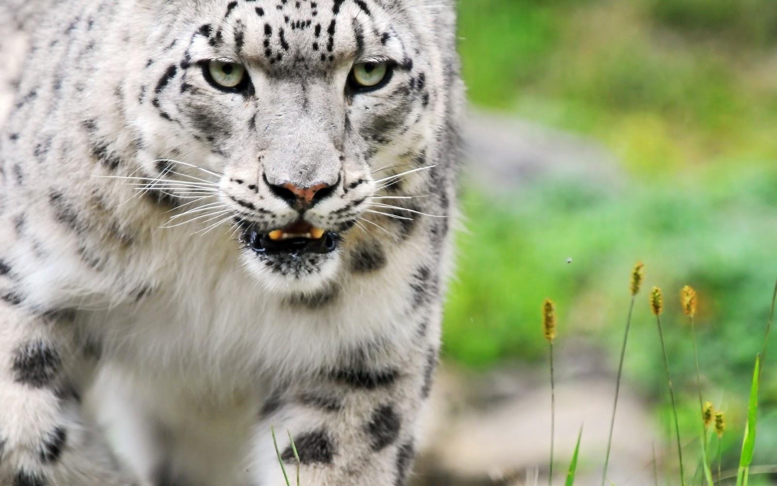 Top Wallpaper Mac Snow Leopard - snow-leopard-desktop-%2526-mac-wallpaper  HD_111957.jpg