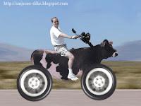 Suzuki, krava, zajebancija, zezancija, slike lude