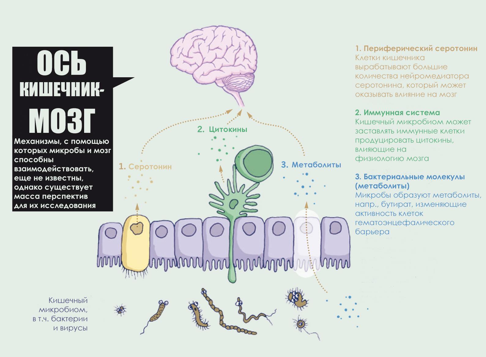 мозговые паразиты у человека
