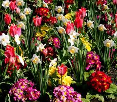 Beautiful April Flowers, Flowers of April