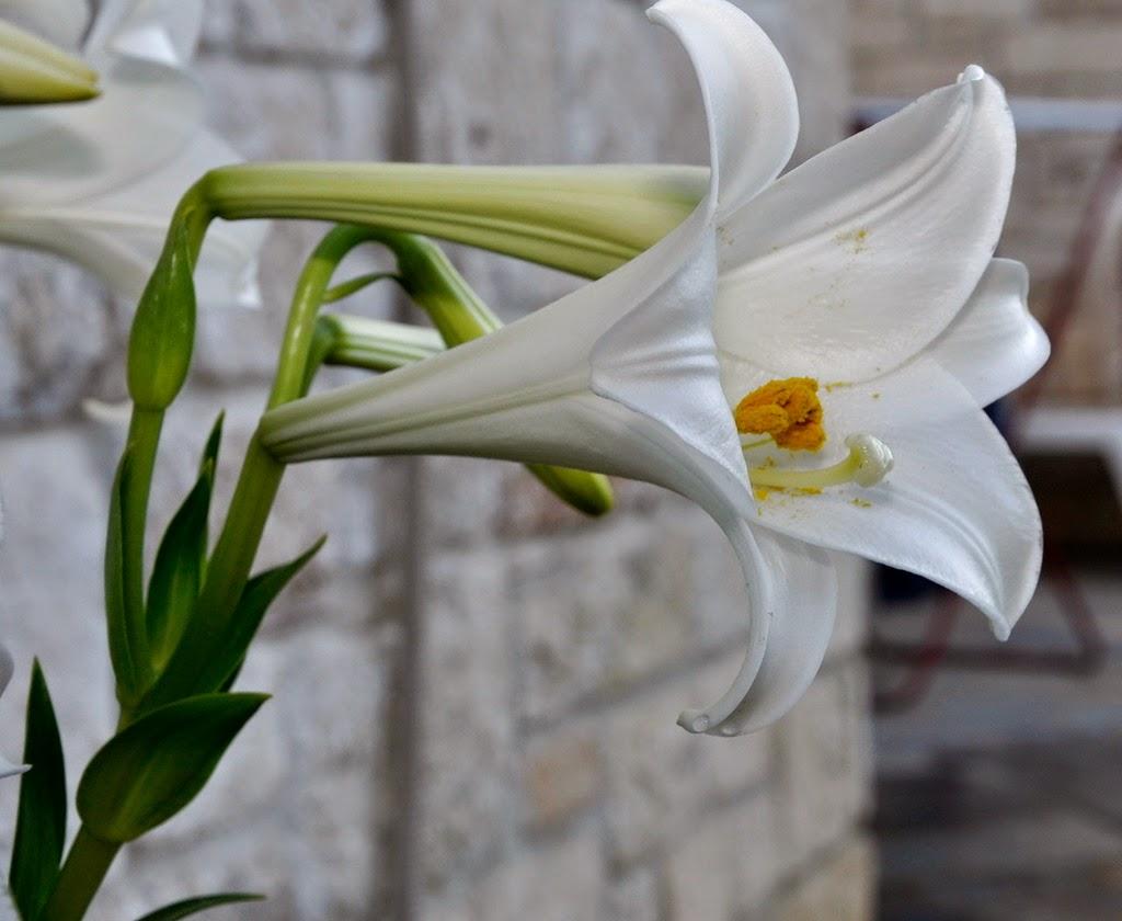 Morfologi tumbuhan beraturan atau bersimetri banyak polysimetris regularis atau actinomorphus yaitu jika dapat dibuat banyak bidang simetri untuk membagi bunga itu dalam ccuart Gallery