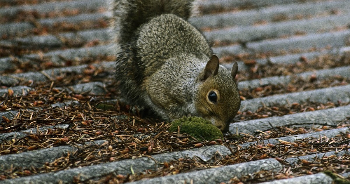 the problems the squirrels cause Flying squirrels can cause vast amounts of  how to get rid of flying squirrels in the  but the type of problems you experience will depend greatly on what.
