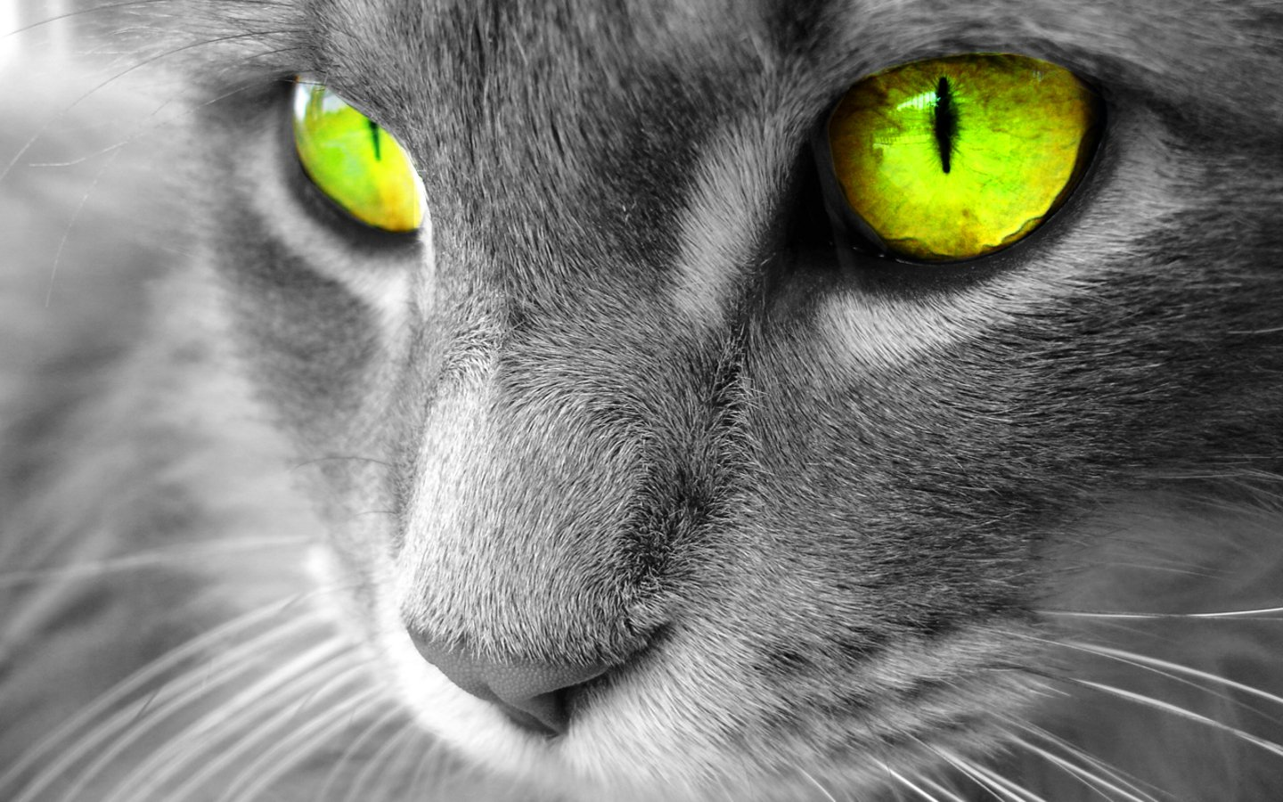 http://4.bp.blogspot.com/-zMHiCzFlGKw/T8cGmGa3Z5I/AAAAAAAAA1A/H5rWqDcNdys/s1600/The-best-top-desktop-cat-wallpapers-3.jpg