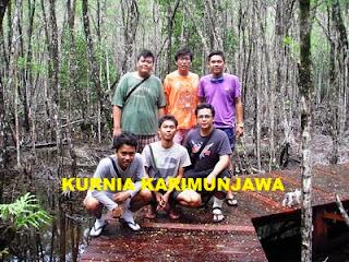 mangrove wisata karimunjawa