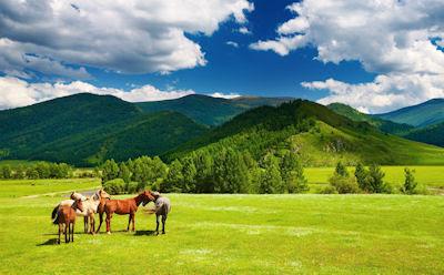 Caballos pura sangre comiendo cerca de las montañas