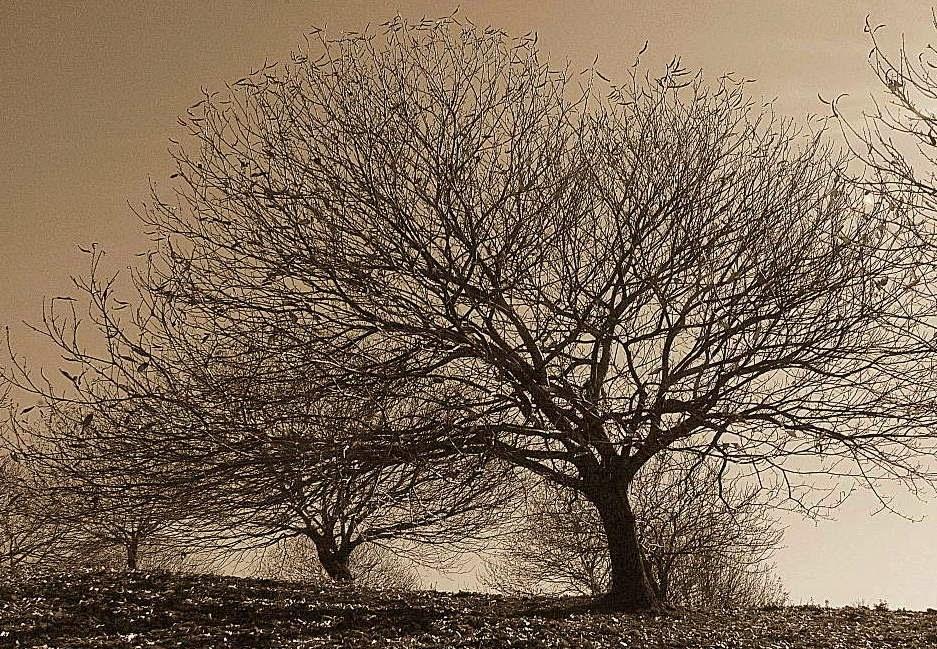Mensajes cristianos e informativos sobre los ltimos for Arboles de hoja perenne sin fruto