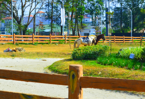 Horseback riding at Sky Ranch in Tagaytay City
