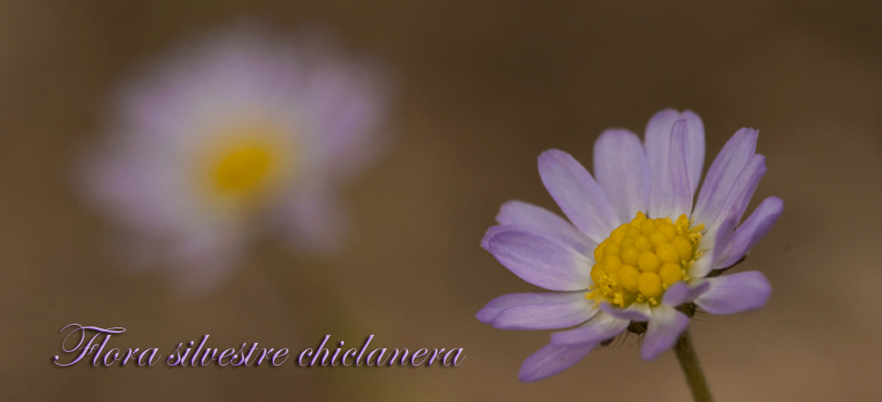 Flora silvestre chiclanera