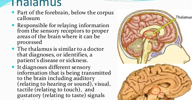 h p p d  research  thalamus linked to hppd
