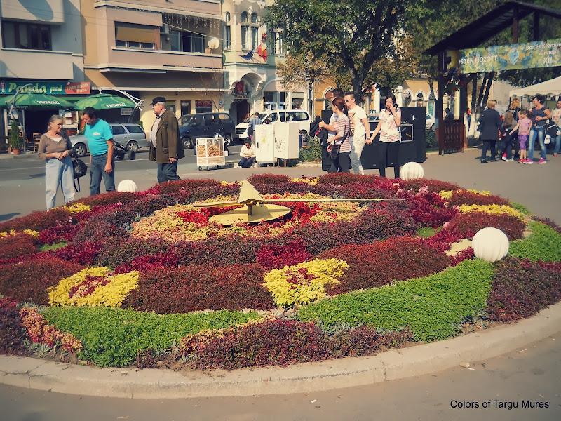 Ceasul cu flori