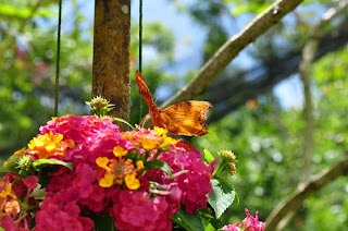 Butterfly Farm in Panglao