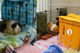 cage loft