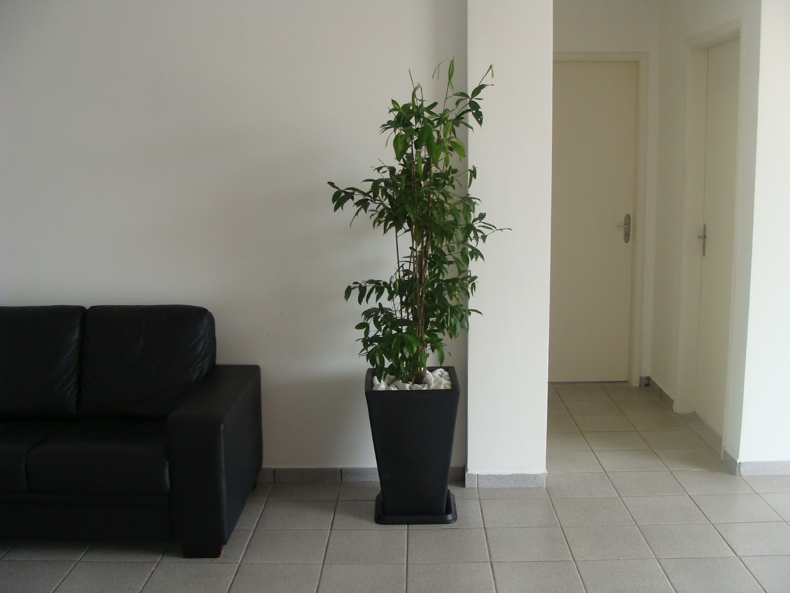 Arbusto de textura semiherbácea, de folhagem ornamental, ramificado