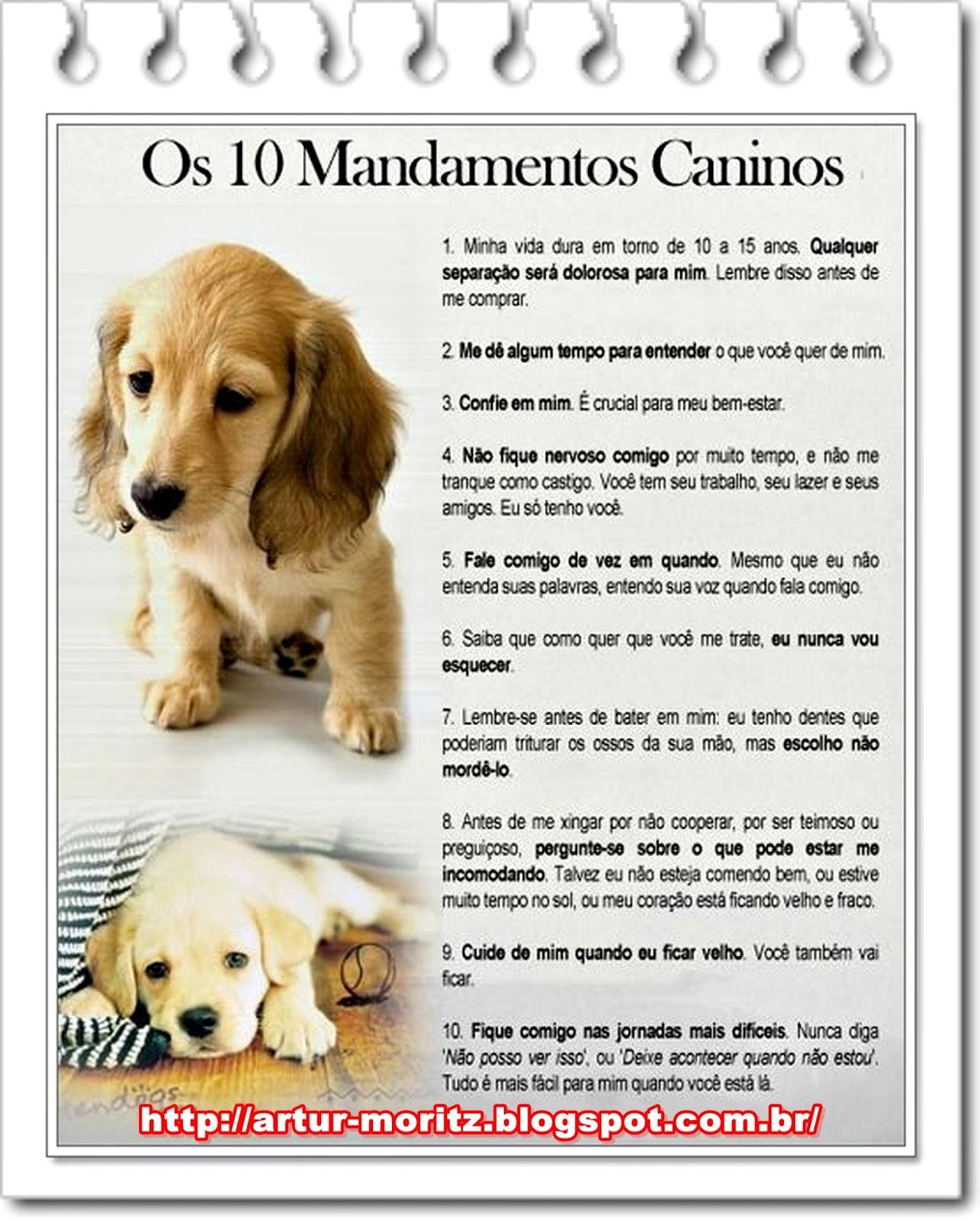 Cmo hacer que los perros dejen de lamerte: 11 pasos