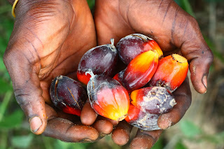 palm oil & making the connection
