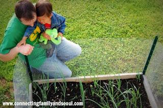 veggies, kid gardens