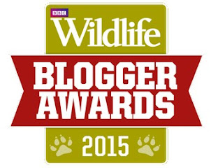 BBC Blogger Awards 'Highly Commended'