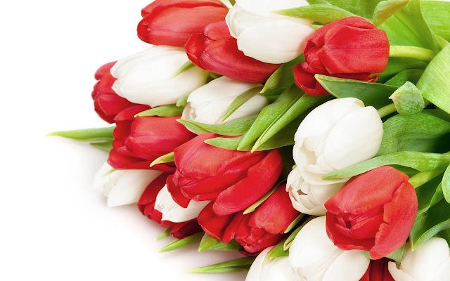 Foto met rode en witte tulpen
