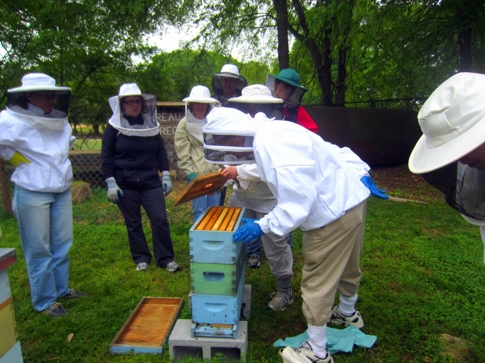 Linda39s Bees Learning To Bee