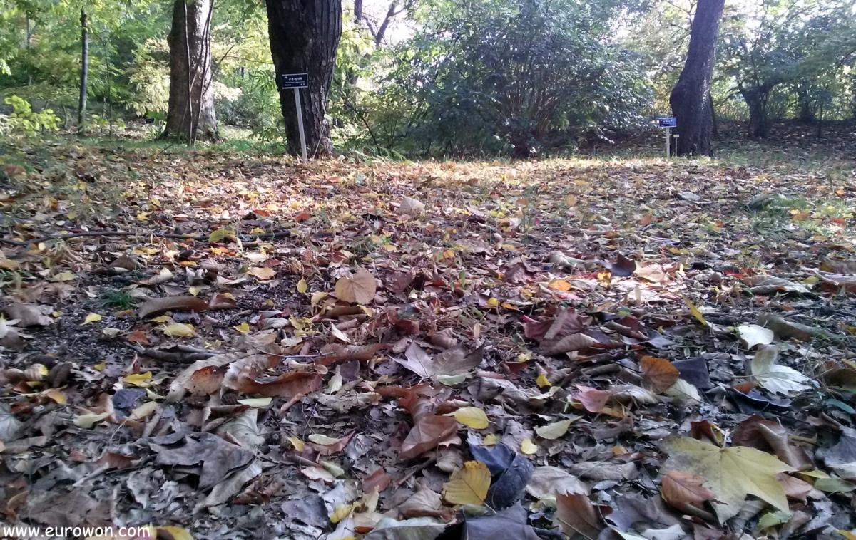 Hojas secas en el otoño coreano