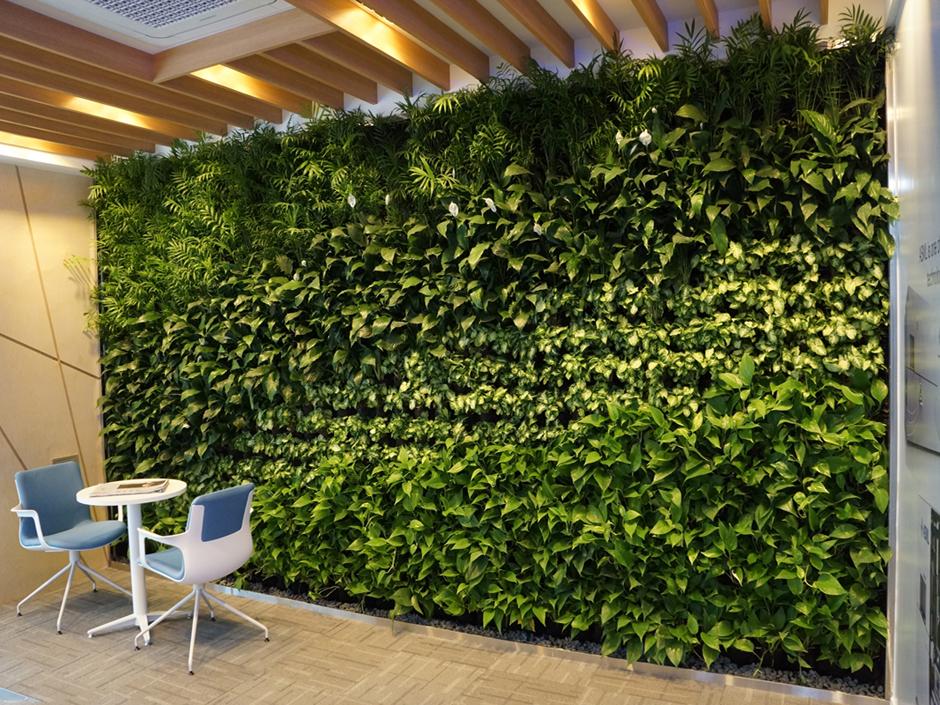 Abyys la ecolog a en m xico for Plantas para muros verdes verticales