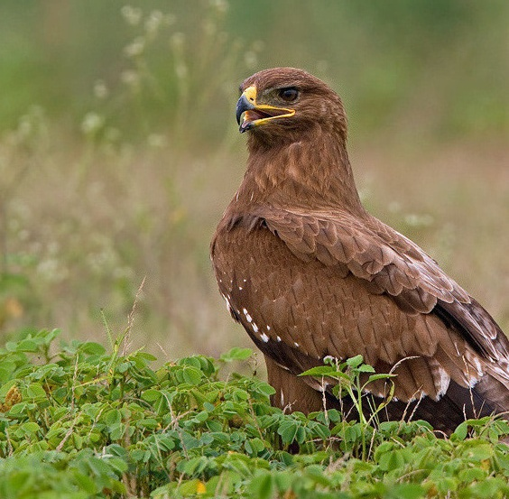 indian migratory birds Posts about indian migratory birds written by crowsandsparrows.