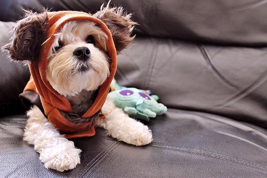 Ewok Puppy