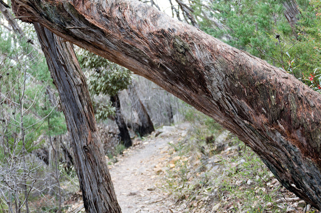 tree trunk across mount abrupt track