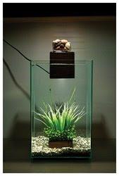 Fluval Chi Nano Aquariums