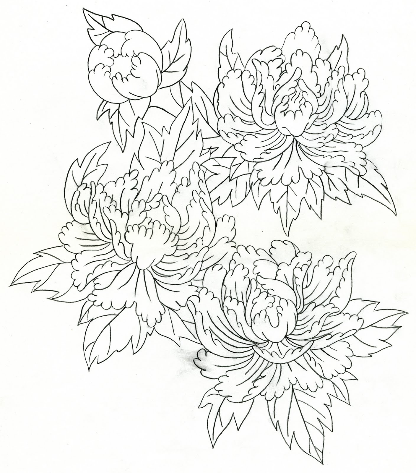 Peony Line Drawing Tattoo : Mike s tattoo design peonies