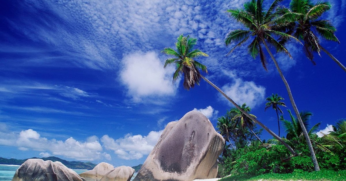hd wallpapers palm tree wallpapers hd