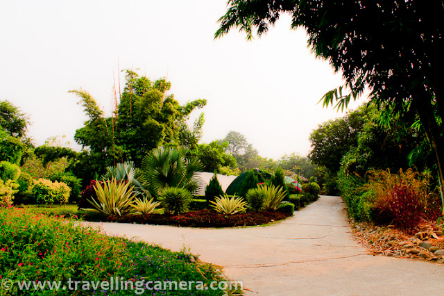 During recent trip to Jim Corbett National Park, we stayed at Tarangi Resort. It was a weekend trip and there are very small time window to explore this place well. Although we had a round of whole resort to see all available options around. Check out this PHOTO JOURNEY to know more about this wonderful holiday resort !!!A photograph showing one of the cottage at Tarangi Resort !!!Tarangi which means waves in Hindi Language is one of the wonderful places to stay in this region. There are various other resorts around the same place and not sure how well equipped they are. Tarangi Resort has huge area and very low density in terms of cottages they have.It's located between the Jim Corbett National Park on one side and the River Kosi on the other... Kosi river is very close to their restaurant, although it was not planned. I will share more details about it soon... Most of the regions at this resort are green and rich in terms of flora n fauna. It's spread over  13 acres on the bank of Kosi river.... Tarangi is probably largest Corbett Resort and I found it an ideal place to stay in for a relaxed, rejuvenating holiday... At least, it was best fit for our group of approximately 30 folks...Some of the cottages at the Tarangi Resort in Corbett  are facing Kosi river and give wonderful view of river & a dense forest behind it. Overall resort is maintained in such a way that it tries to give some sense of living in wild :) ... I would not say, it's completely like that but try is of-course there...Papaya trees within the resort... Not only papaya, there were lot of other fruits around the place and some fields dedicated for growing vegetables... Tarangi is located on the banks of River Kosi which is one of the two main rivers in Corbett. This Resort is approximately 250 kms from New Delhi and part of roadside village in Corbett called, Dhikuli.  Tarangi is approximately 8 kms from Ramnagar Railway Station and 4 kms from Bijrani Jungle Gate. Since this resort is spread on a huge land of 13 acres, there is a separate area with two huge grounds and nice paths around it. Whole is full of greenery and colorful flowers/plants...It seemed that grounds on other end are not in much use, as there is one well maintained ground near cottages. Most of the folks in our group were also using the same for cricket.I simply loved these colors around our Cottages !!!A view of entry to Tarangi Resort. The path on right is leading towards Kosi river by drawing a boundary line of Tarangi Resort. The other one is hitting resort reception and all the cottagesA nice plant with leaves having green color on top and red shade in bottom part.Since it's a huge area, so automating manual efforts is important :)There is no swimming pool in this resort. Although there was one which was washes away by Kosi River. Sounds of lovely birds around this place were amazing. Although we left early in morning for Safari, but during day time some birds can be seen... And I think spa is also swept by Kosi year during monsoons last year..During a quick walk of 20 mins at Tarangi, we caught various birds in our travelling-camera. Although some of them were really shy and scary, but we managed to click some of them :Some high quality bamboo was there at Tarangi and some colorful birds on top of it were making the whole thing more beautiful..Here is the cricket ground, I was talking about.. Some of the folks in our group spent most of the time on this ground...Anurag and Vaibhav walking around the cricket ground at Tarangi Resort, Jim Corbett National Park !!Overall, it was decent stay at Tarangi ... Previously I have stayed in Ram Ganga Resort, which is also a decent option around Jim Corbett National Park !!!